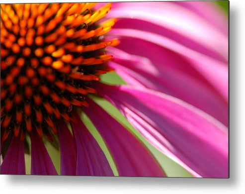 Macro Metal Print featuring the photograph Cone Flower by Scott Gould