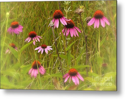 Landscape Metal Print featuring the photograph Cone Flowers In The Meadow by Neil Doren