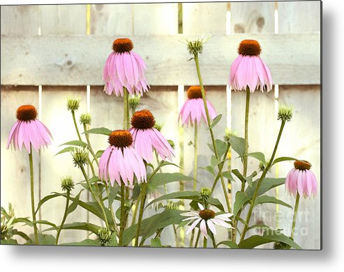 Flower Garden Metal Print featuring the photograph Coneflower Patch by Steve Augustin