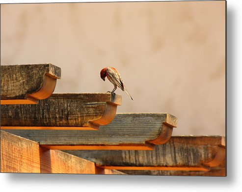 Bird Metal Print featuring the photograph Contemplation by Rebecca Cozart