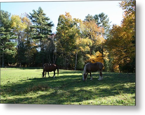 Landscape Metal Print featuring the photograph Contentment by Doug Mills