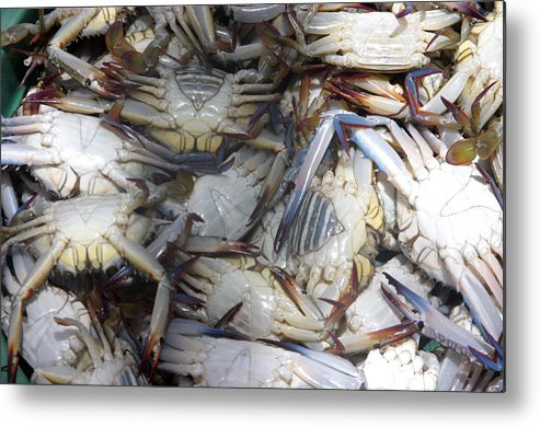 Photographer Metal Print featuring the photograph Crabs by Jez C Self