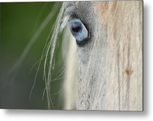 Horse Metal Print featuring the photograph Crazy One by Running J