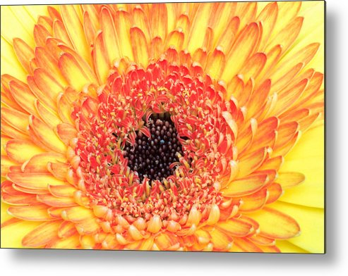 Flower Metal Print featuring the photograph Creation Of A Masterpiece by Pierre Leclerc Photography