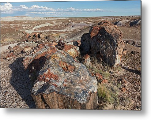 Tom Daniel Metal Print featuring the photograph Crystal Forest Stump by Tom Daniel