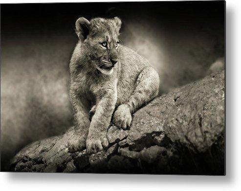 Lion Metal Print featuring the photograph Cub by Christine Sponchia
