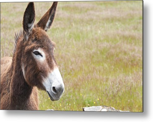 Donkey Metal Print featuring the photograph Curious Donkey by Enrico Crobu