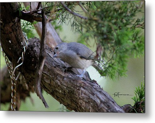 Wildlife Outdoor Images Metal Print featuring the photograph Curious Thought by Felipe Gomez