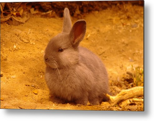 Bunny Metal Print featuring the photograph Cute Bunny by Jeff Swan