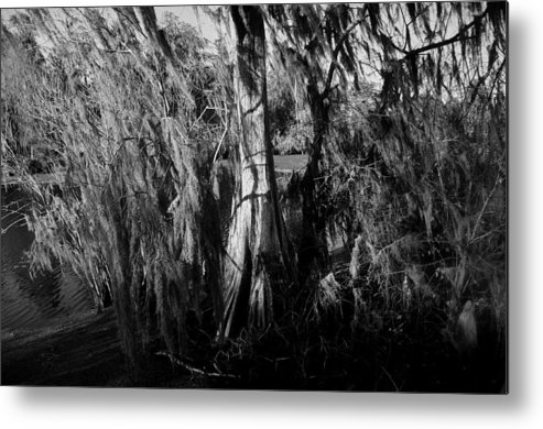 Cypress Tree Metal Print featuring the photograph Cypress Tree by David Lee Thompson
