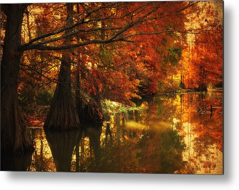 Cypress Trees Metal Print featuring the photograph Cypress Trees In The Misy Morning by Iris Greenwell
