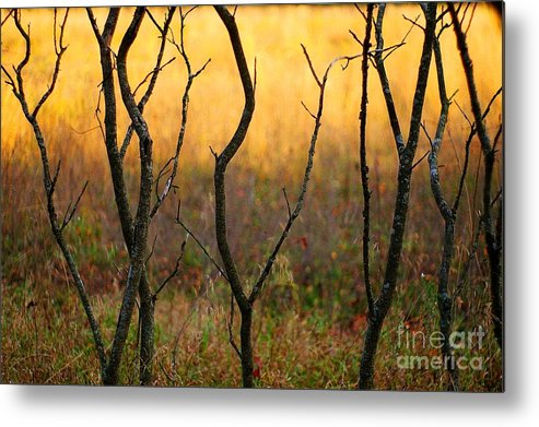 Dance Metal Print featuring the photograph Dancing Trees by Randy Pollard