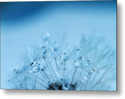 Water Metal Print featuring the photograph Dandelion Bouquet by Rebecca Cozart