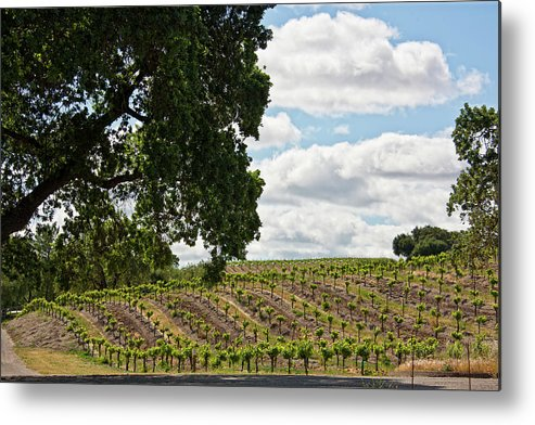 Rows Metal Print featuring the photograph De Vines by Patricia Stalter