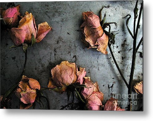 Flower Metal Print featuring the photograph Dead Roses 4 by Kathi Shotwell