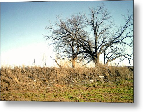 Metal Print featuring the photograph Dead Tree by Chad Taber