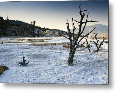 Mammoth Hot Springs Metal Print featuring the photograph Dead Wood Springs by Chad Davis