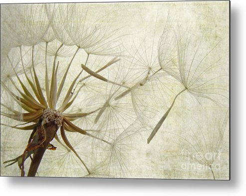 Dandelion Metal Print featuring the photograph Dearly Departed by Jan Piller