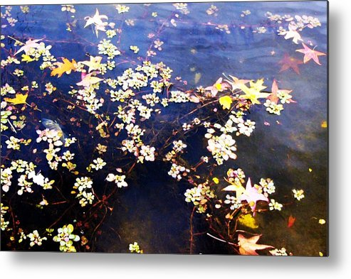 Water Metal Print featuring the photograph Death Among The Leaves by Kenna Westerman