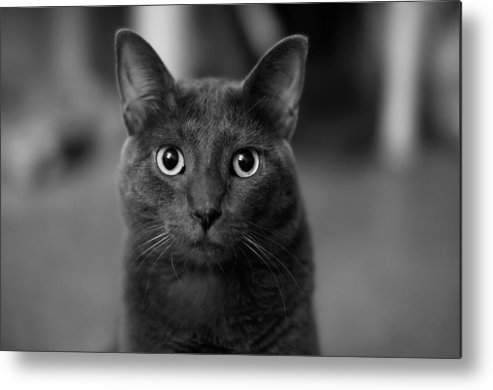 Kitten Metal Print featuring the photograph Deep Stare by Mandy Wiltse
