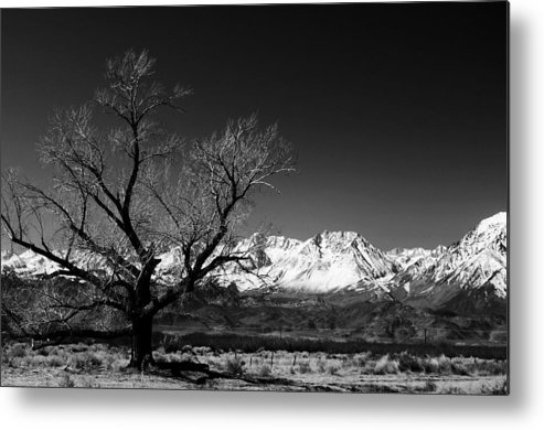 Black Adn White Metal Print featuring the photograph Desolation by Jessica Roth
