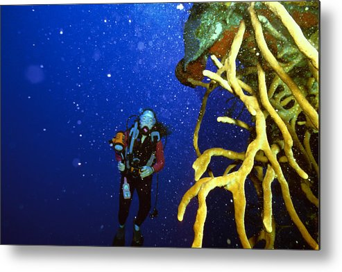 Dive Metal Print featuring the photograph Diving The Wall At Little Cayman by Carl Purcell