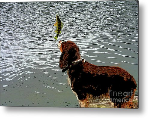 Dog Vs Perch 4 Metal Print featuring the digital art Dog Vs Perch 4 by Chris Taggart
