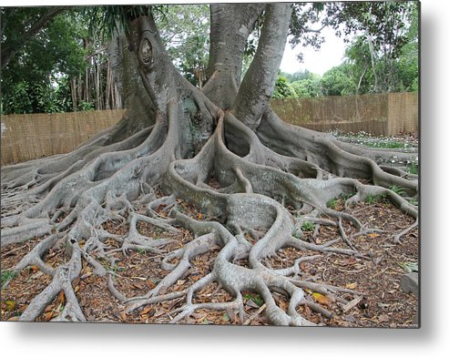 Tree Metal Print featuring the photograph Dragonfeet by Laura Martin