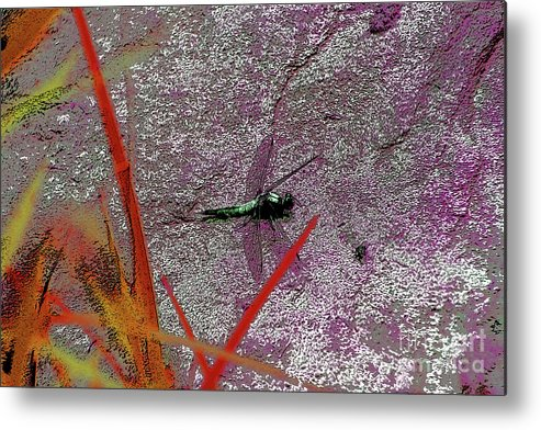 Dragonfly 3 Metal Print featuring the digital art Dragonfly 3 by Chris Taggart