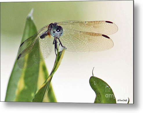 Dragonfly Metal Print featuring the photograph Dragonfly Face by Terri Mills