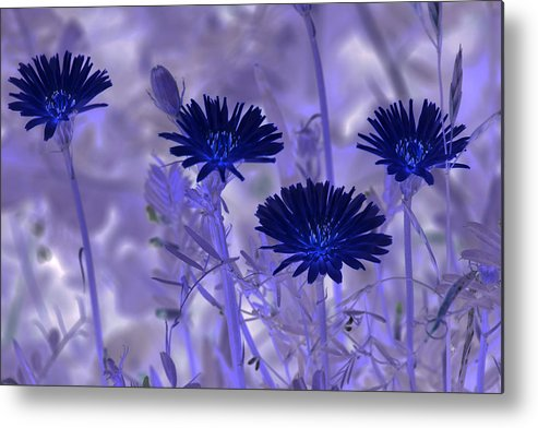 Nature Metal Print featuring the digital art Dream Fields by Tom Rickborn