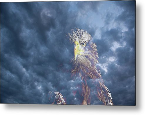 Eagle Metal Print featuring the photograph Dreaming Of The Sky by Kuni Photography