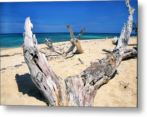 St Croix Metal Print featuring the photograph Driftwood Buck Island National Park by Thomas R Fletcher