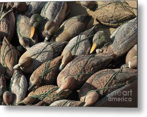 Ducks Metal Print featuring the photograph Duck Decoys On Burano by Michael Henderson