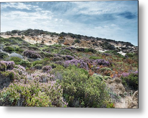 Plants Metal Print featuring the photograph Dune Plants As Erica And Beautiful Sky by Compuinfoto