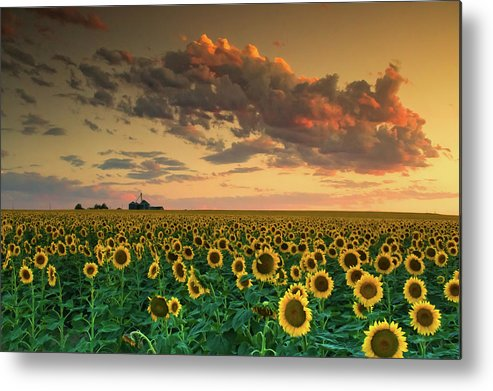 Sunflower Metal Print featuring the photograph Dusk by John De Bord