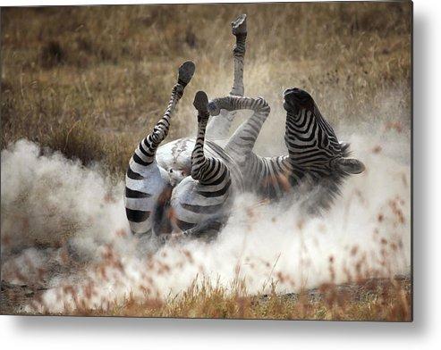 Tanzania Metal Print featuring the photograph Dust Bath by Michel Guyot