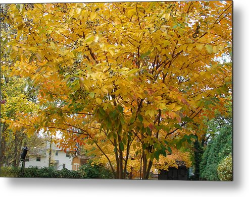 Fall Metal Print featuring the photograph Early Fall by Gregory Smith