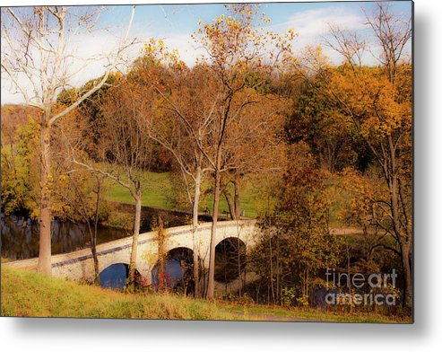 Tree Metal Print featuring the photograph Echoes Of Courage by Roy Branson