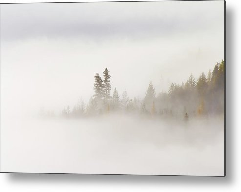Fog Metal Print featuring the photograph Emergence by Mike Dawson