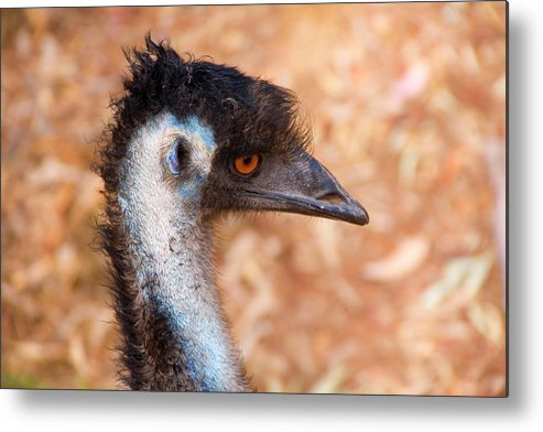 Emu Metal Print featuring the photograph Emu Profile by Mike Dawson