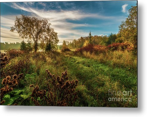 Forest Metal Print featuring the photograph Enchanted Forest by Gordon Pusnik