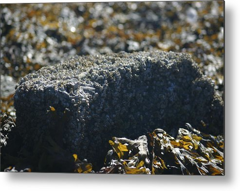 Rock Metal Print featuring the photograph Encrusted Rock by Jeffrey Ober