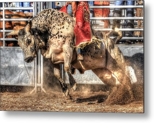 Bull Metal Print featuring the photograph Extreme Bulls by Cat Hesselbacher