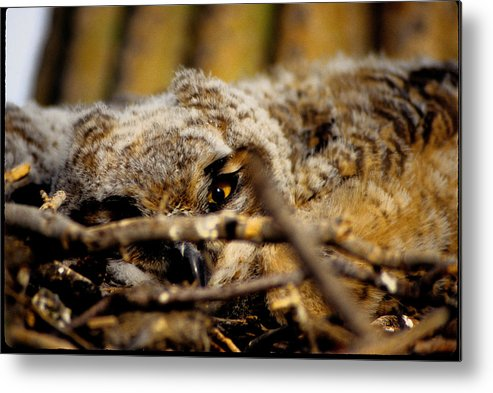 Arizona Desert Photography Metal Print featuring the photograph Eye Of The Owl by John Gee