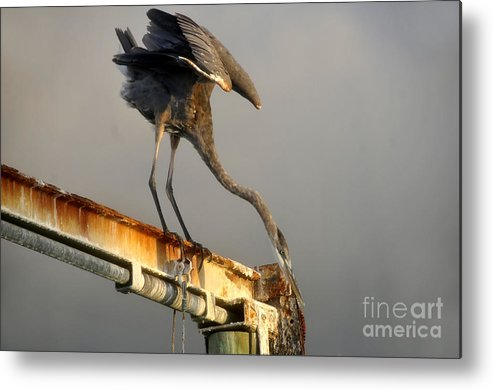 Hunting Metal Print featuring the photograph Eyeing The Catch by David Lee Thompson