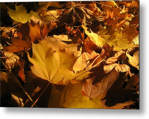Fall Metal Print featuring the photograph Fall by Bamalam Photography
