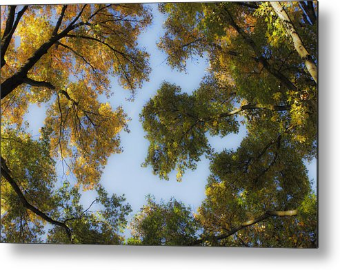 Fall Metal Print featuring the photograph Fall Canopy In Virginia by Teresa Mucha