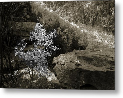 Nature Metal Print featuring the photograph Fall Foliage by Yuri Lev
