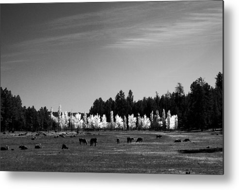 Landscape Metal Print featuring the photograph Fall In Line 2 by Randy Oberg